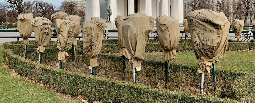 Shrubs packed in sacks to protect them in the winter (seen in Vienna, Austria)