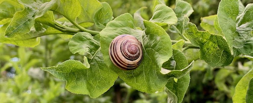 Snail sitting on a leaf