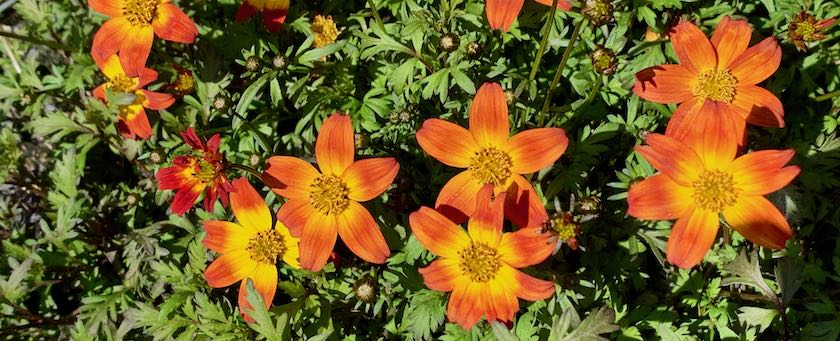 Orange-colored flowers