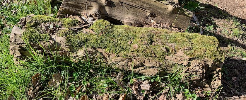 Mossy log on a meadow