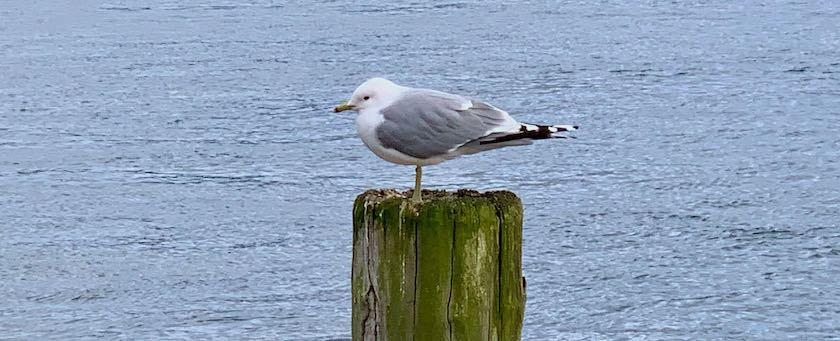Seagull sitting on a pole